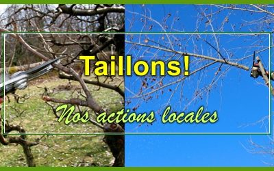 Taillons !